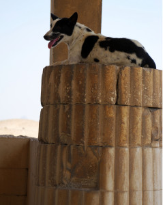 Cane su colonna a Saqqara