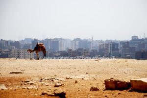 Dromedario e il Cairo