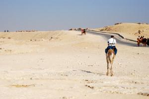 Dromedario sulla strada delle piramidi